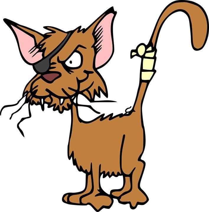 A nem szabványos cicáknak is jár a szépségverseny!