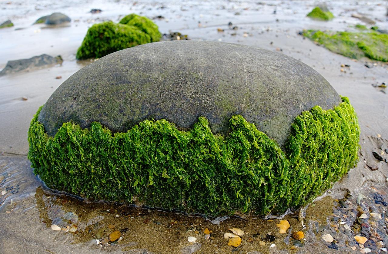 Az algák jótékony hatása: enni vagy kenni?