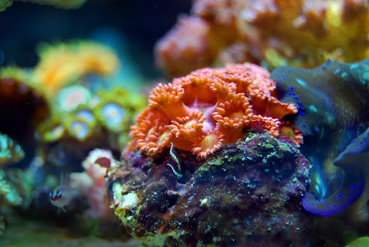 2019 színe az élő korall